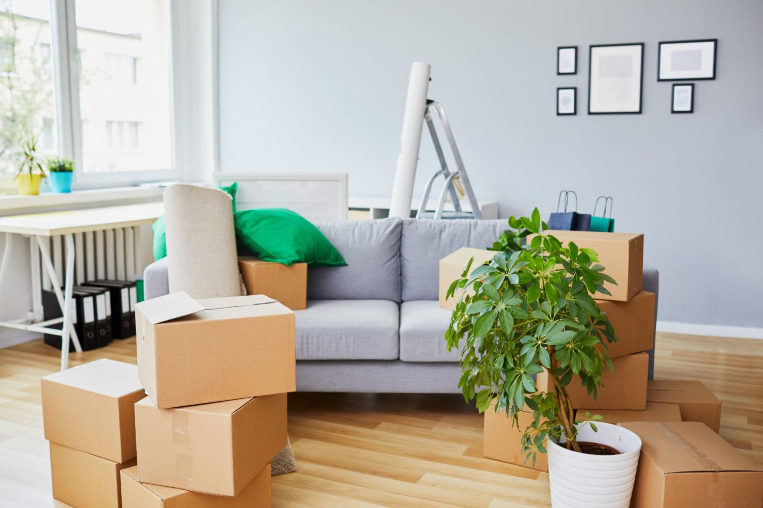 salon avec cartons d'emménagement
